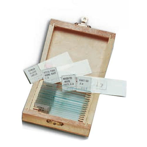 WOOD BOX COINTANING 15 PREPARED GLASS SLIDES               IN VETRO ASSORTITI